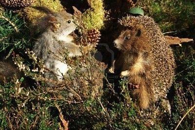 """Résultat de recherche d'images pour """"hérisson et ecureuil"""""""